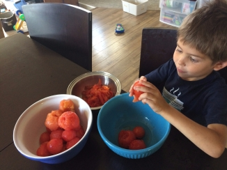 Peeling the skins off the tomatoes for canning.